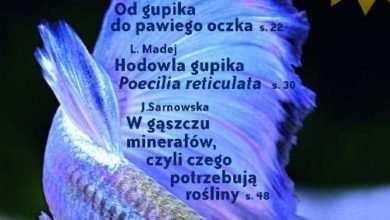 Okładka Magazyn Akwarium czasopismo 4/2009 miesięcznik akwarystyczny
