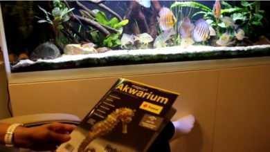 Photo of Akwarystyka Rodzinna jeszcze raz o Magazynie Akwarium