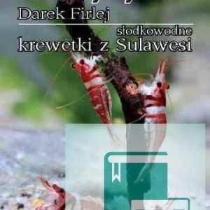 Słodkowodne krewetki Sulawesi