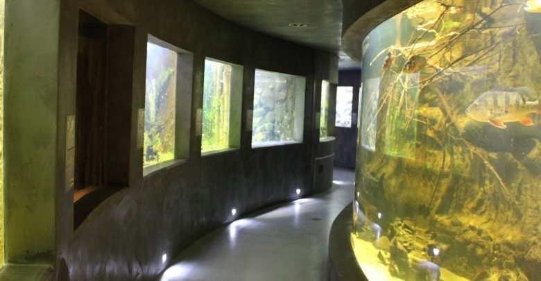 Akwarium publiczne Ogrodu Zoologicznego w Płocku