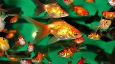 Photo of Aklimatyzacja ryb