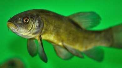 Photo of Deformacje ciała ryb