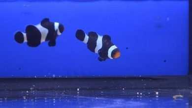 choroby ryb morskich