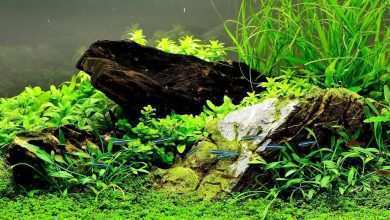 Rośliny akwariowe. Porady akwarystyczne. Akwarystyka