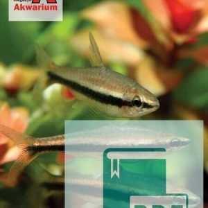 Okładka Magazyn Akwarium czasopismo 9/2012