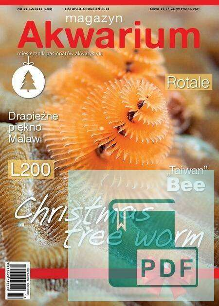 Okładka Magazyn Akwarium czasopismo 11-12/2014