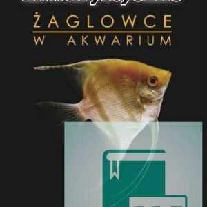 Żaglowce skalary w akwarium