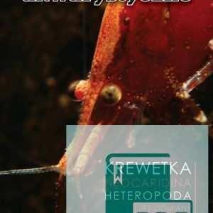 Neocaridina heteropoda