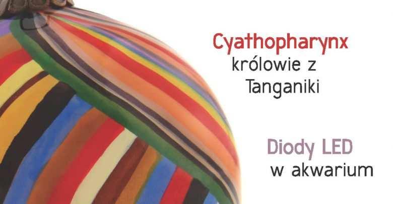 Okładka Magazyn Akwarium czasopismo 12/2012 miesięcznik akwarystyczny