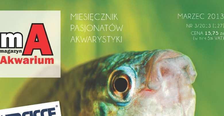 Okładka Magazyn Akwarium czasopismo 3/2013