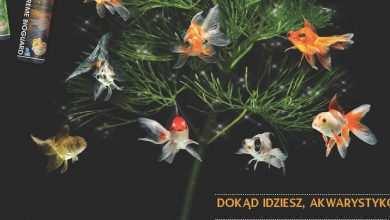 Okładka Magazyn Akwarium czasopismo 12/2013