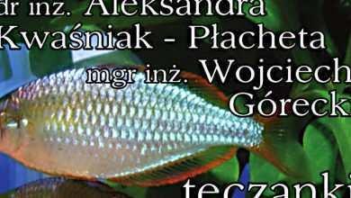 Photo of Zeszyt Akwarystyczny nr 5 (5): Aleksandra Kwaśniak-Płacheta, Wojciech Górecki: Tęczanki