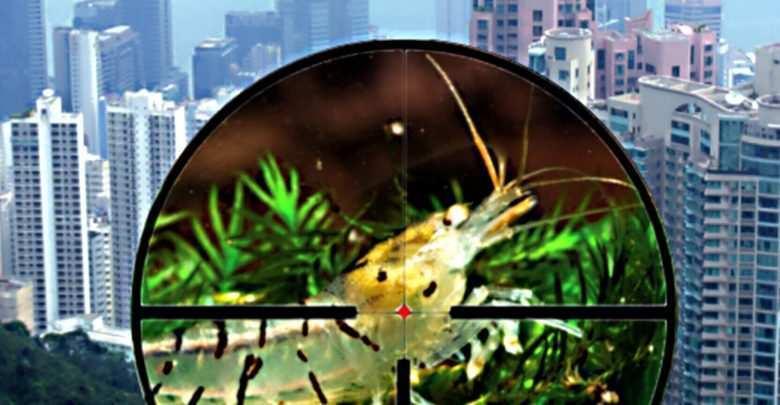 Krewetki akwariowe w środowisku naturalnym