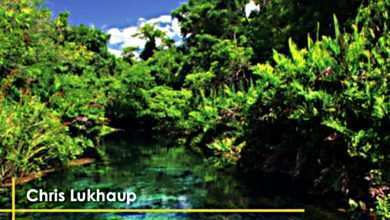 Photo of Zeszyt Akwarystyczny nr 20 (20): Chris Lukhaup: Niezwykłe bogactwo natury, czyli łowcy roślin w Brazylii