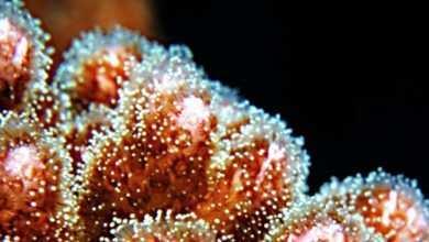 Koralowce twarde. Mini-atlas zwierząt morskich