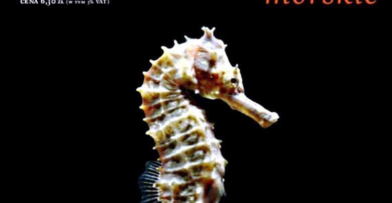 Pławikoniki i iglicznie w akwarium