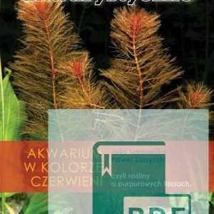 Rośliny czerwone Akwarium w kolorze czerwieni, czyli rośliny o purpurowych liściach