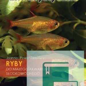 Małe rybki. Ryby do małego akwarium słodkowodnego