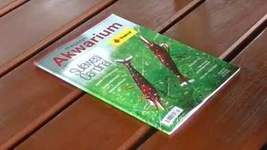 recenzja wydania czasopisma Magazyn Akwarium