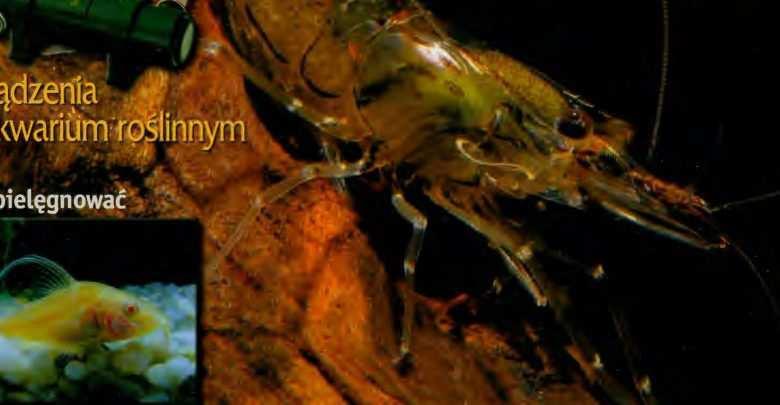 Okładka Magazyn Akwarium czasopismo 5/2004 miesięcznik akwarystyczny