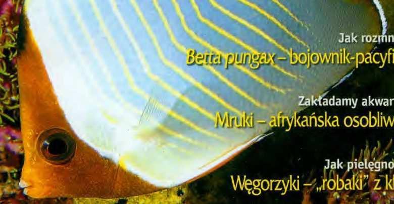 Okładka Magazyn Akwarium czasopismo 9/2004 miesięcznik akwarystyczny