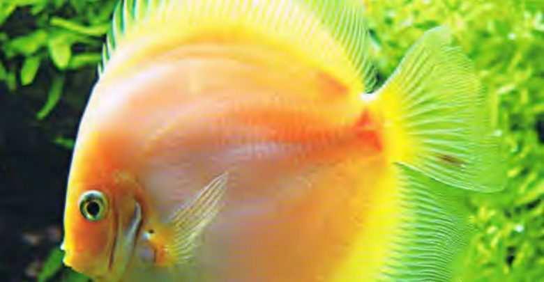 Okładka Magazyn Akwarium czasopismo 3/2006 miesięcznik akwarystyczny