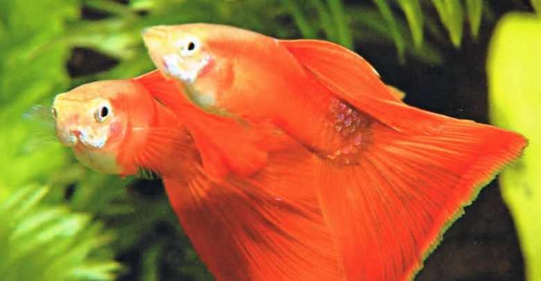 Okładka Magazyn Akwarium czasopismo 4/2006 miesięcznik akwarystyczny