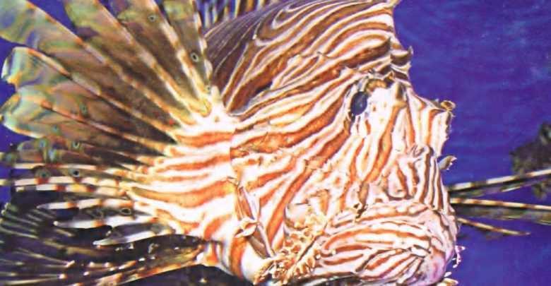 Okładka Magazyn Akwarium czasopismo 7/2006 miesięcznik akwarystyczny