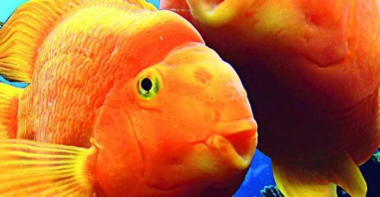 Okładka Magazyn Akwarium czasopismo 2/2008 miesięcznik akwarystyczny