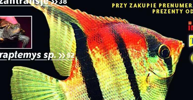 Okładka Magazyn Akwarium czasopismo 11/2009 miesięcznik akwarystyczny