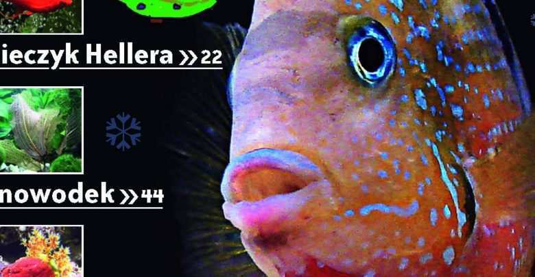 Okładka Magazyn Akwarium czasopismo 12/2009 miesięcznik akwarystyczny