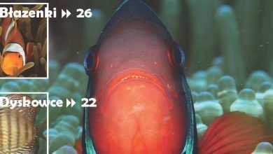 Okładka Magazyn Akwarium czasopismo 3/2010 miesięcznik akwarystyczny