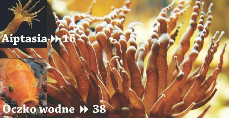 Okładka Magazyn Akwarium czasopismo 7/2010 miesięcznik akwarystyczny