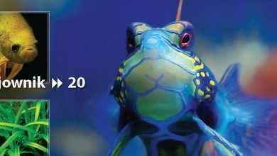Okładka Magazyn Akwarium czasopismo 12/2010 miesięcznik akwarystyczny
