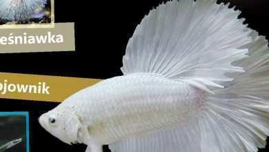 Okładka Magazyn Akwarium czasopismo 2/2011 miesięcznik akwarystyczny