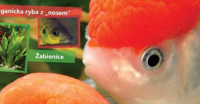 Okładka Magazyn Akwarium czasopismo 6/2011 miesięcznik akwarystyczny