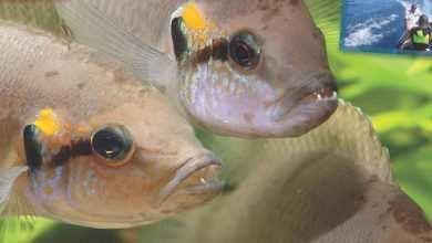 Okładka Magazyn Akwarium czasopismo 10/2011 miesięcznik akwarystyczny