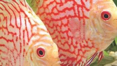 Okładka Magazyn Akwarium czasopismo 3/2012 miesięcznik akwarystyczny