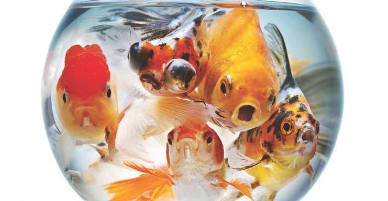 Okładka Magazyn Akwarium czasopismo 5/2012 miesięcznik akwarystyczny