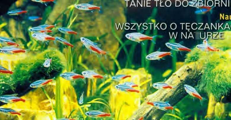 Historia akwarystyki. Okładka Magazyn Akwarium czasopismo 1/2001 miesięcznik akwarystyczny