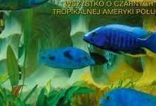 Okładka Magazyn Akwarium czasopismo 1/2002 miesięcznik akwarystyczny