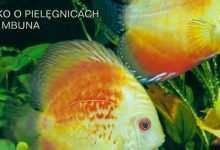 Okładka Magazyn Akwarium czasopismo 2/2002 miesięcznik akwarystyczny
