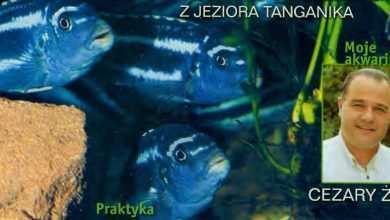 Okładka Magazyn Akwarium czasopismo 4/2002 miesięcznik akwarystyczny