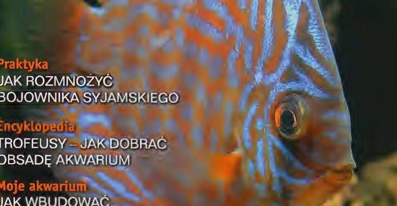 Okładka Magazyn Akwarium czasopismo 12/2002 miesięcznik akwarystyczny