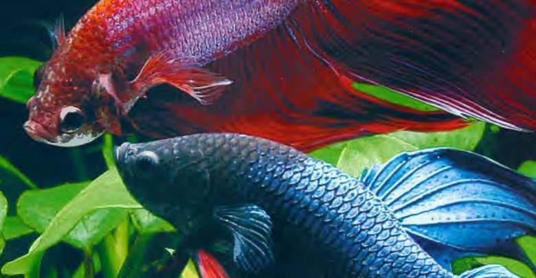 Okładka Magazyn Akwarium czasopismo 3/2003 miesięcznik akwarystyczny