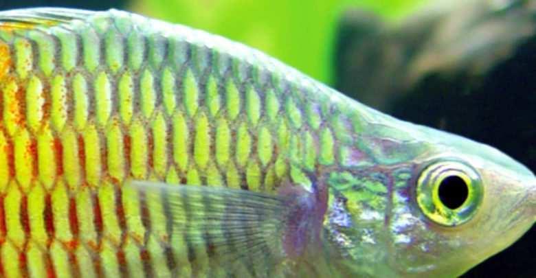 Akwarium dwumiesięcznik - małe Akwarium fotografia okładkowa