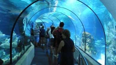 akwarium Barcelona