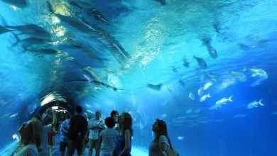 oceanarium Walencja