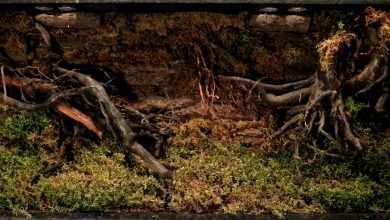 Photo of Mariusz Schauer: Tło zewnętrzne w akwarium – dekorowanie zbiornika część II
