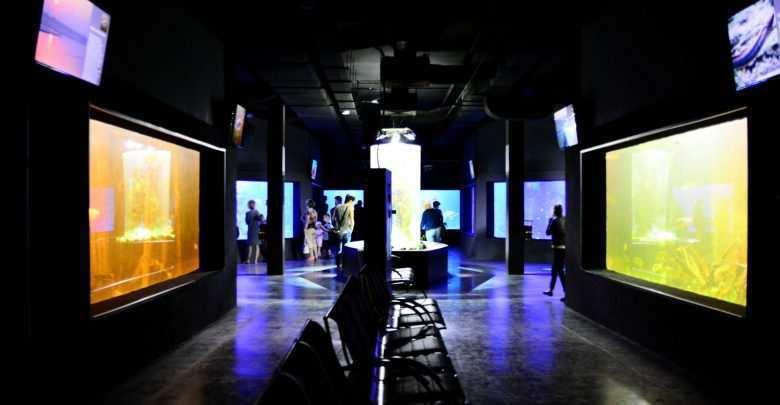 wystawa akwarystyczna